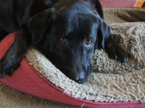 My dog Angel looking sad