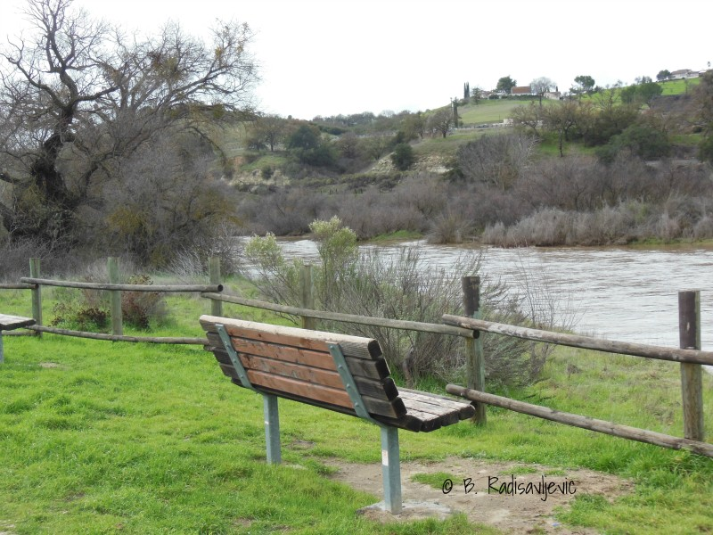 Bench overlooking the Salinas River in Paso Robles during January 2017
