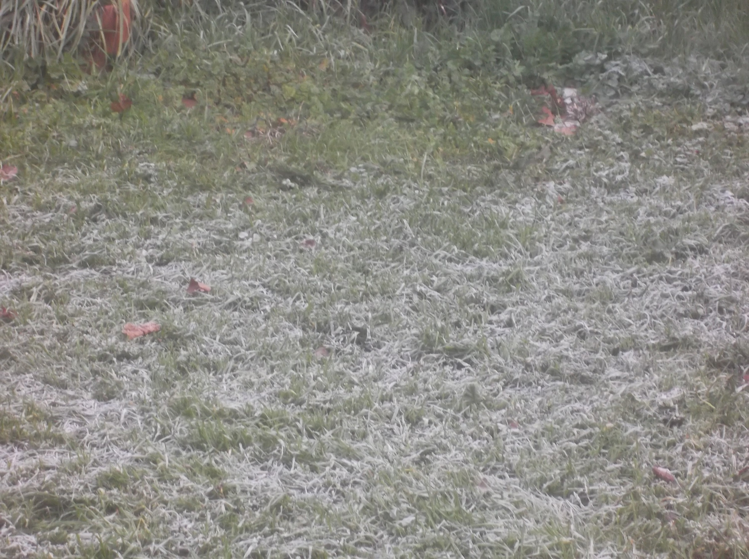 Frost on our back lawn 1-28-17