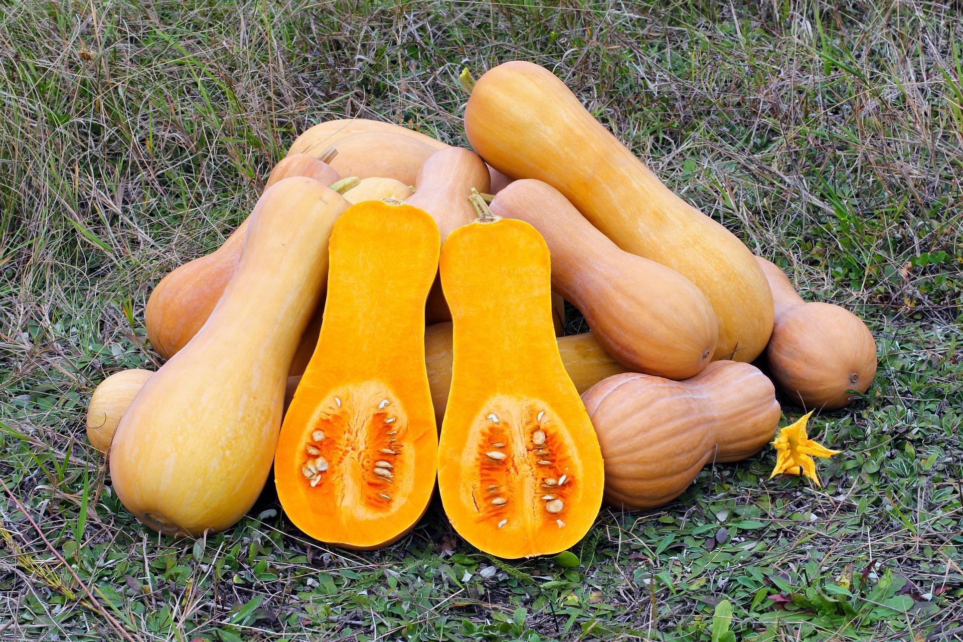 https://pixabay.com/en/butternut-squash-produce-gourd-109131/