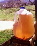 "Sun Tea ""brewing"" on the porch banister"