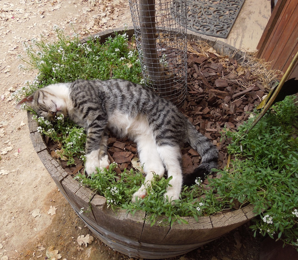 I was sleeping as soundly as this cat I saw at Jack Creek Farm years ago.