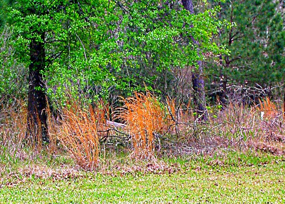 Grass at the Forest Edge - Gus Kilthau