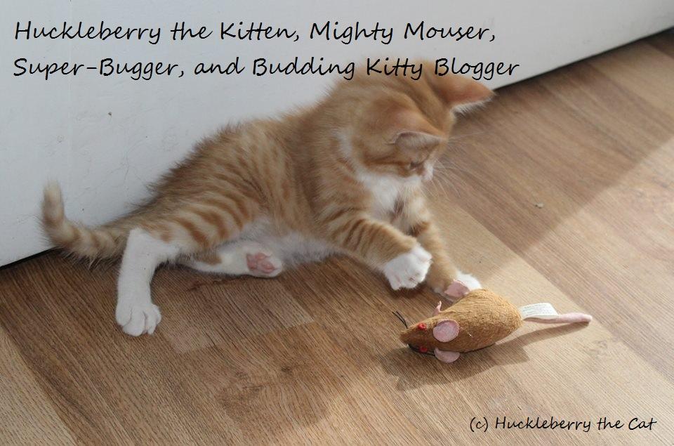 Huckleberry the Kitten