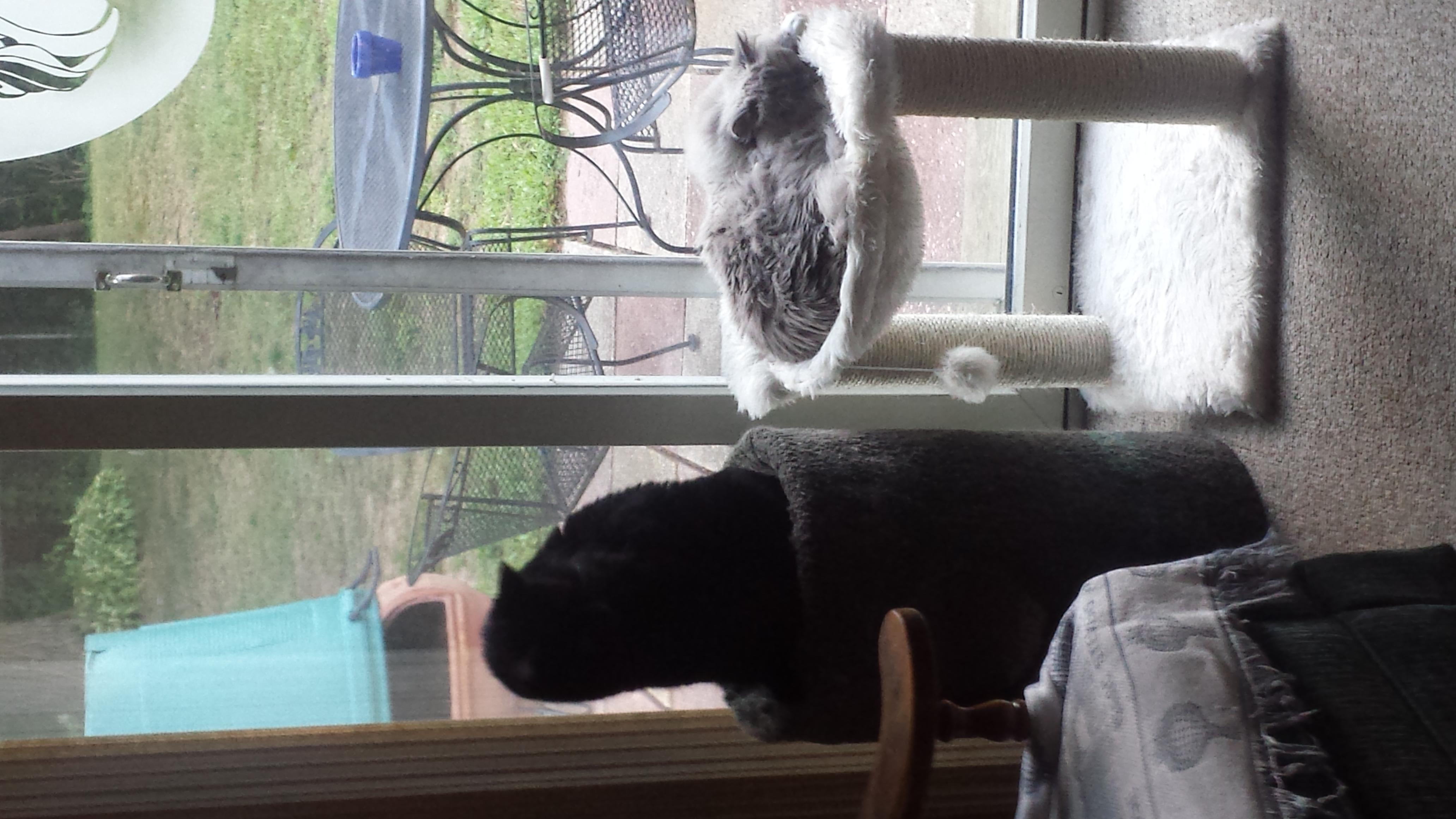 Ozzy & Coco