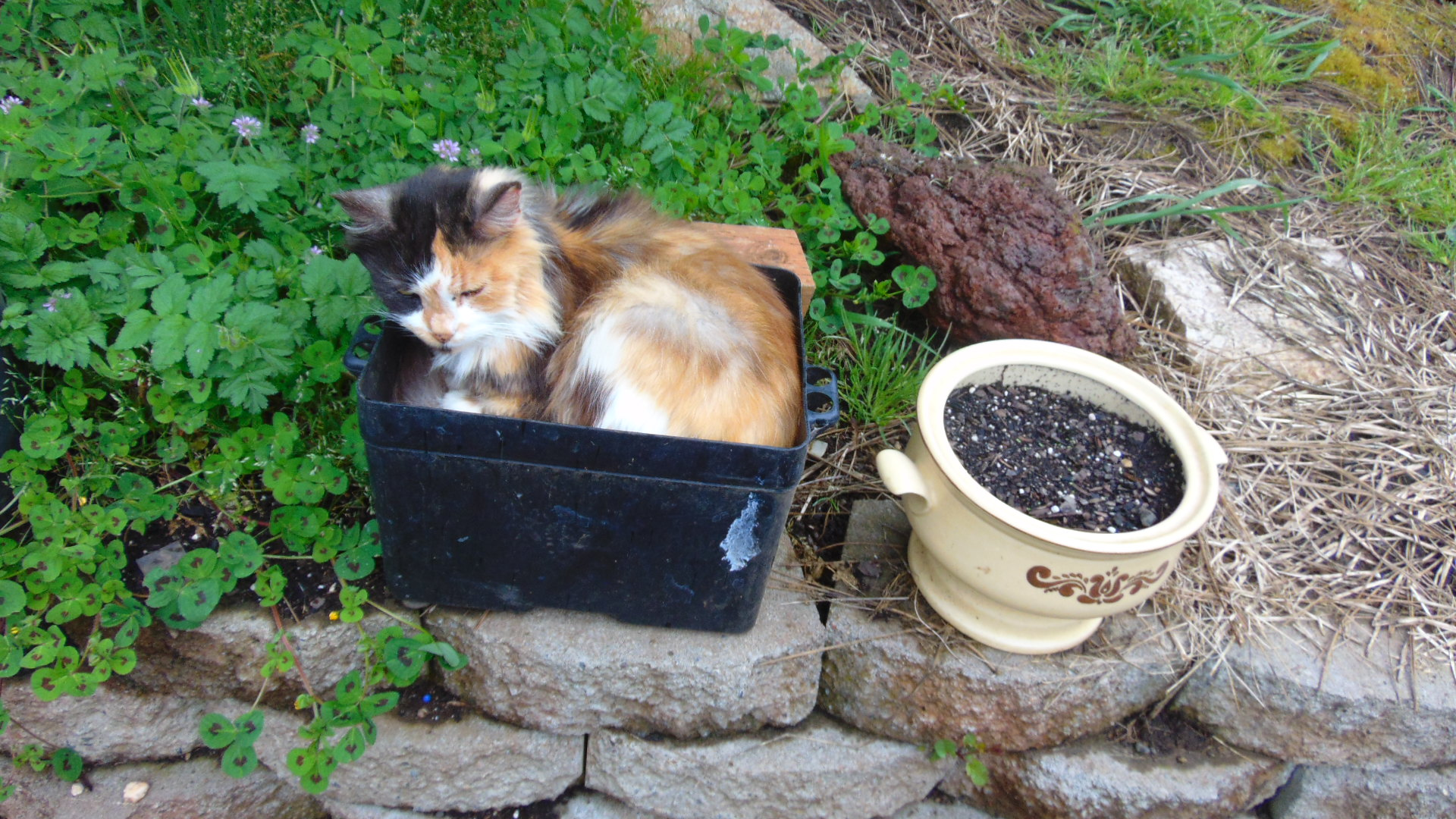 Something is growing in the flower pot.