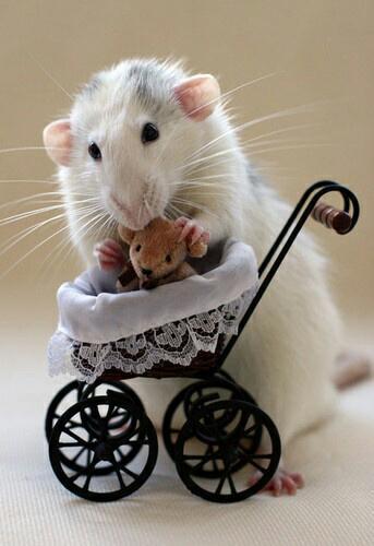 Animals are baby