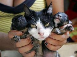 Catdog - Cat dog