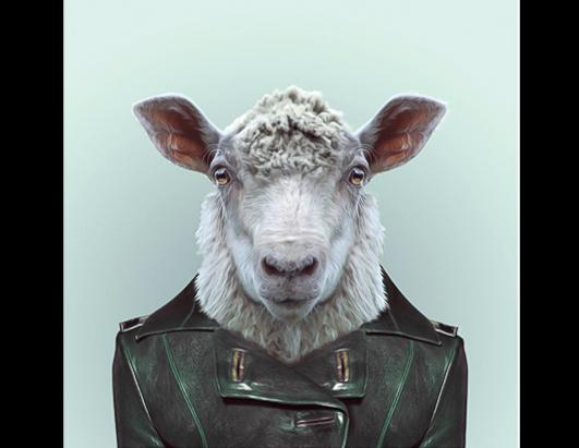 http://abcnews.go.com/Entertainment/slideshow/zoo-portraits-showcase-animals-human-garb-20786324?page=4