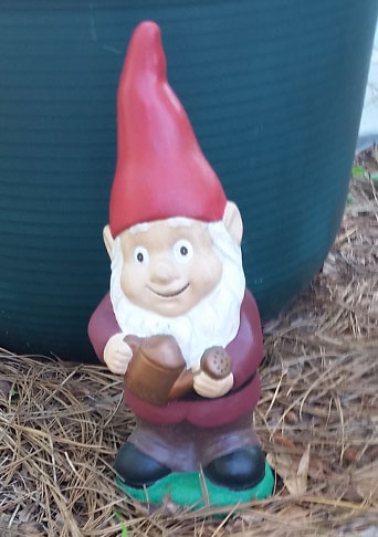 One of my garden gnomes.