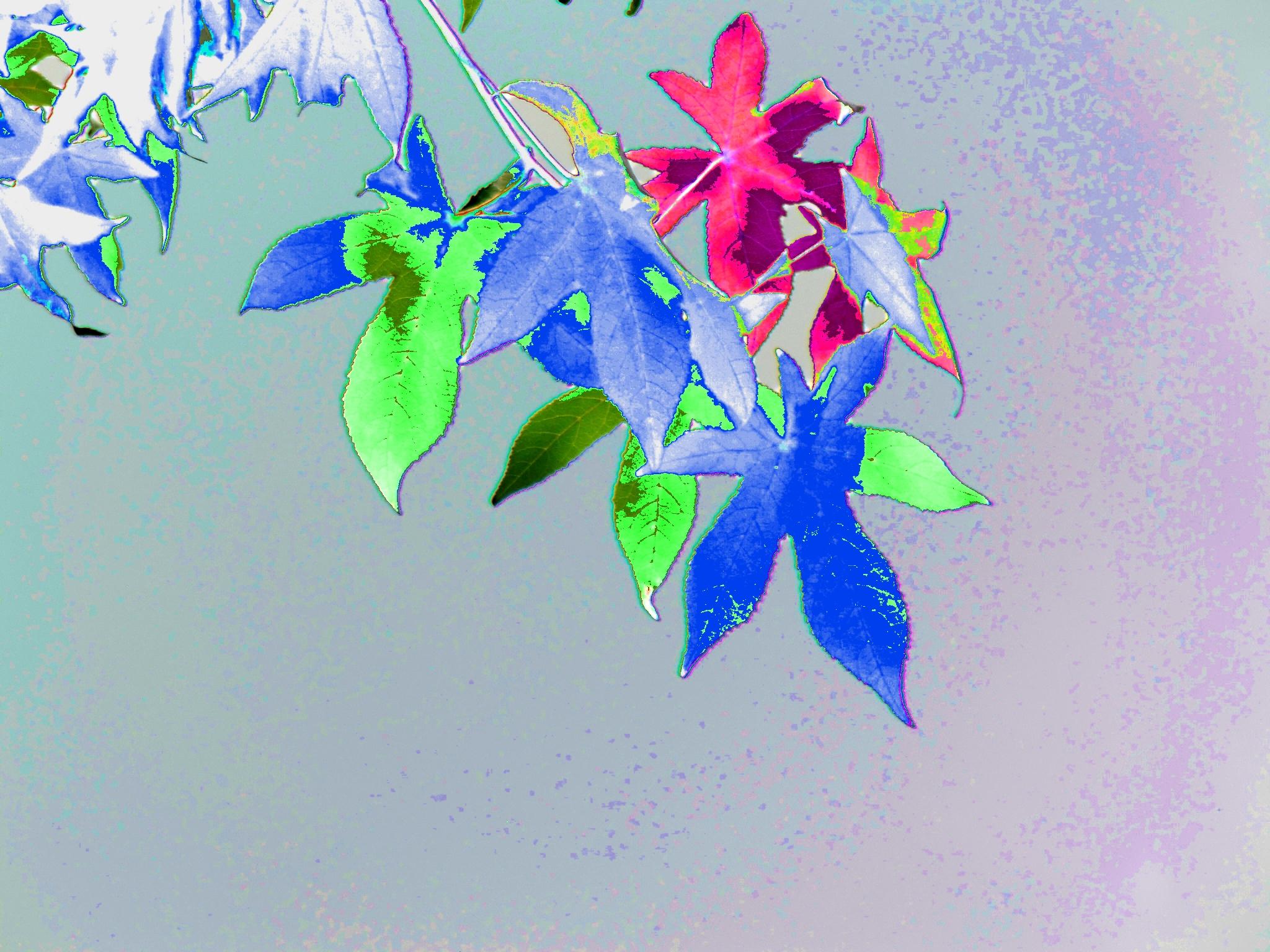 Image: Magical Sweetgum Tree Leaves - Gus Kilthau