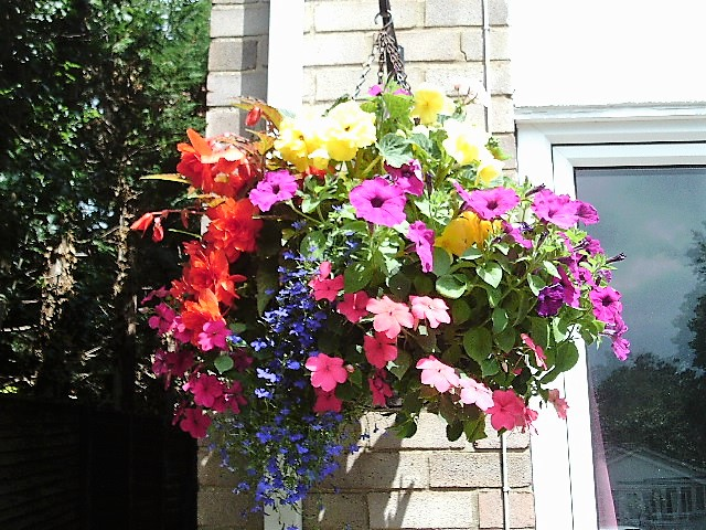 Another of my hanging baskets.