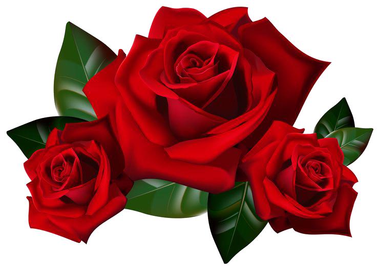 google image rose