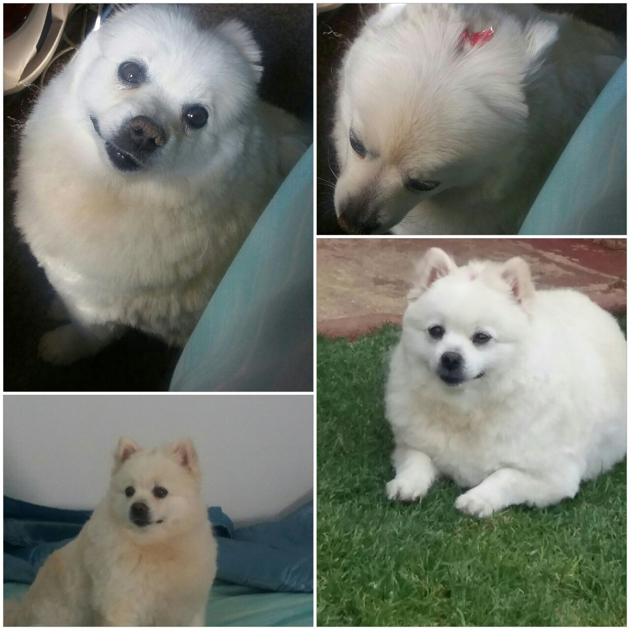 Collage of missy Daisy after parlour