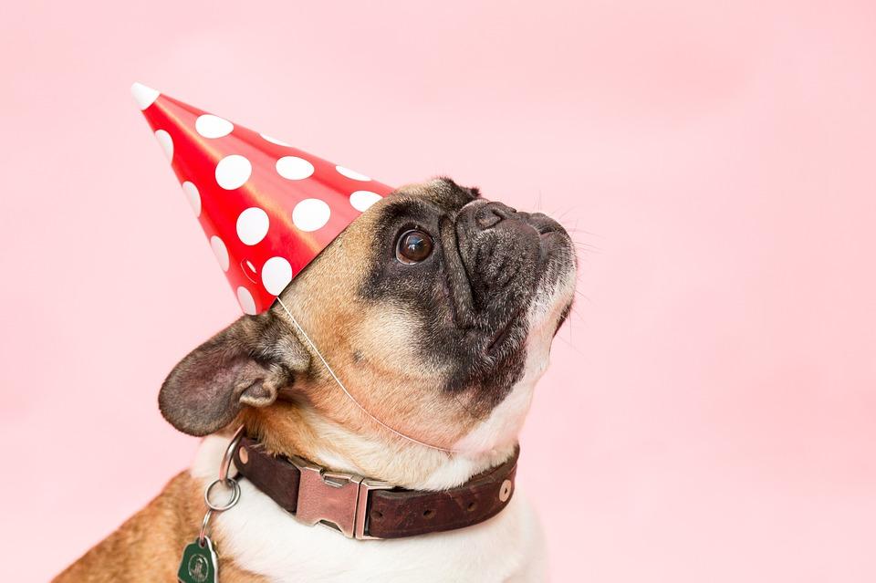 https://pixabay.com/en/dog-pug-party-had-animal-pink-2557266/