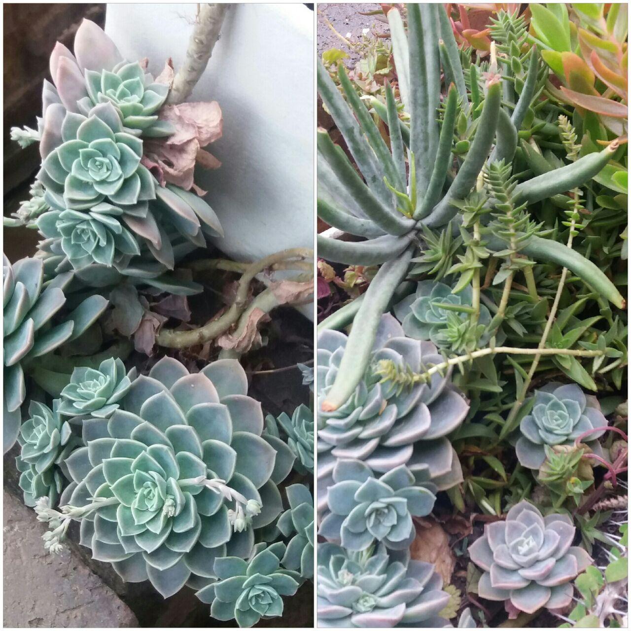 succulents I took photos of