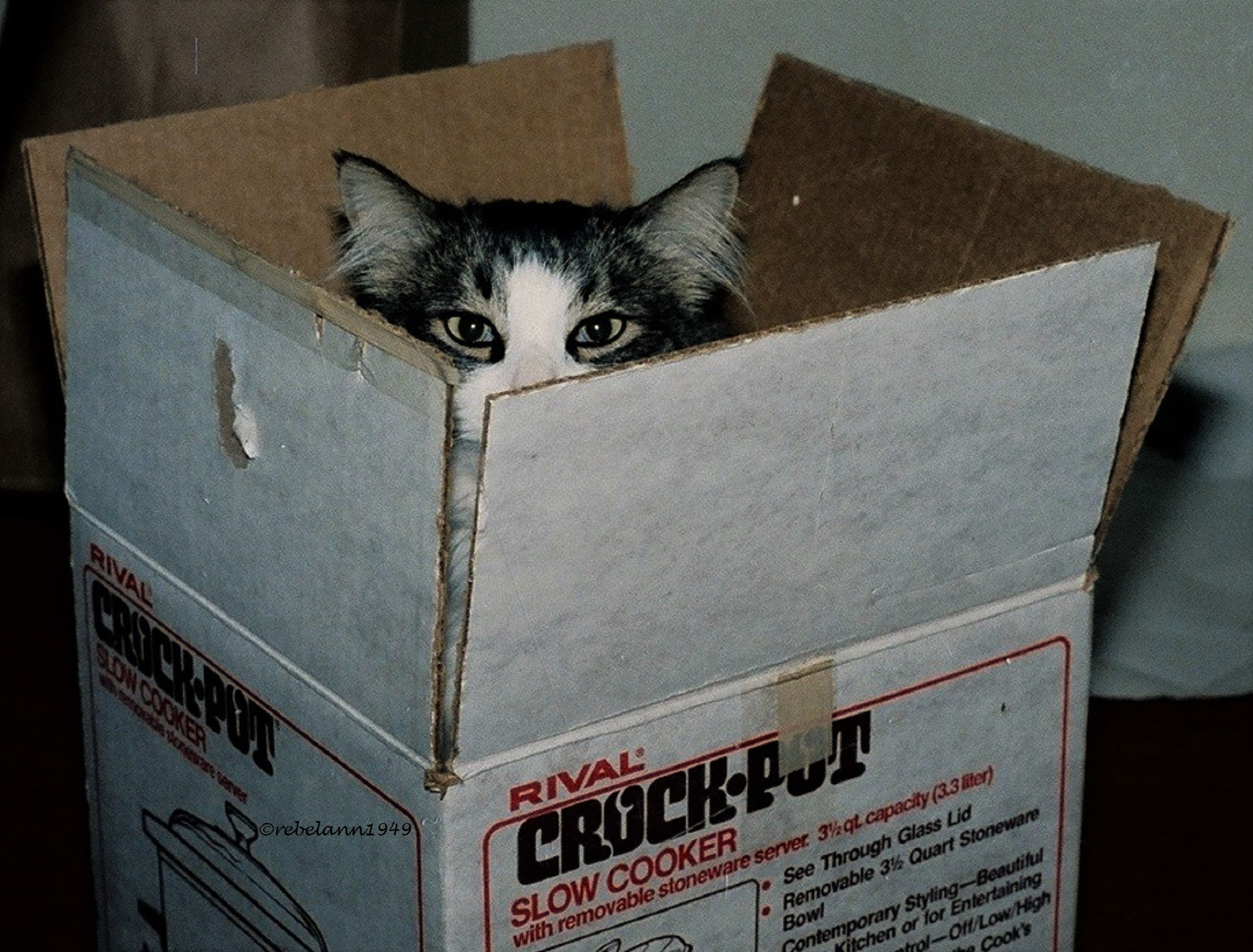 Hotshot peeking at me out of his box, he was such a sweetheart.