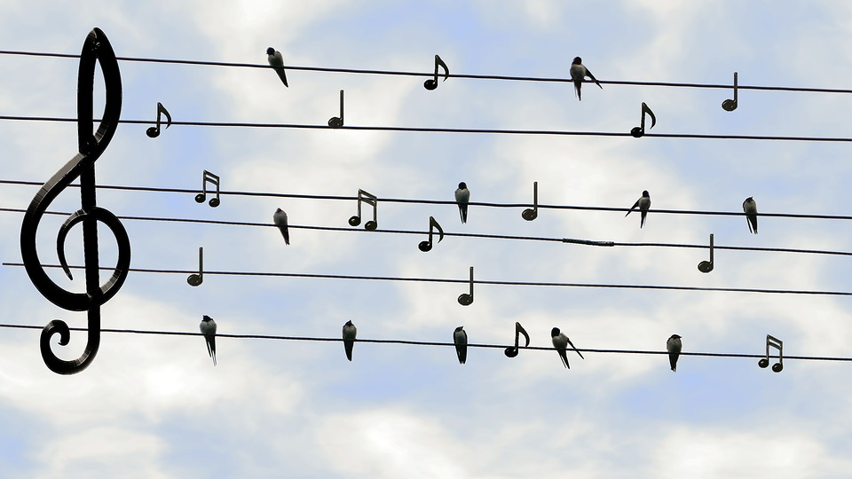 https://pixabay.com/en/birds-swifts-singing-twitter-music-2672101/
