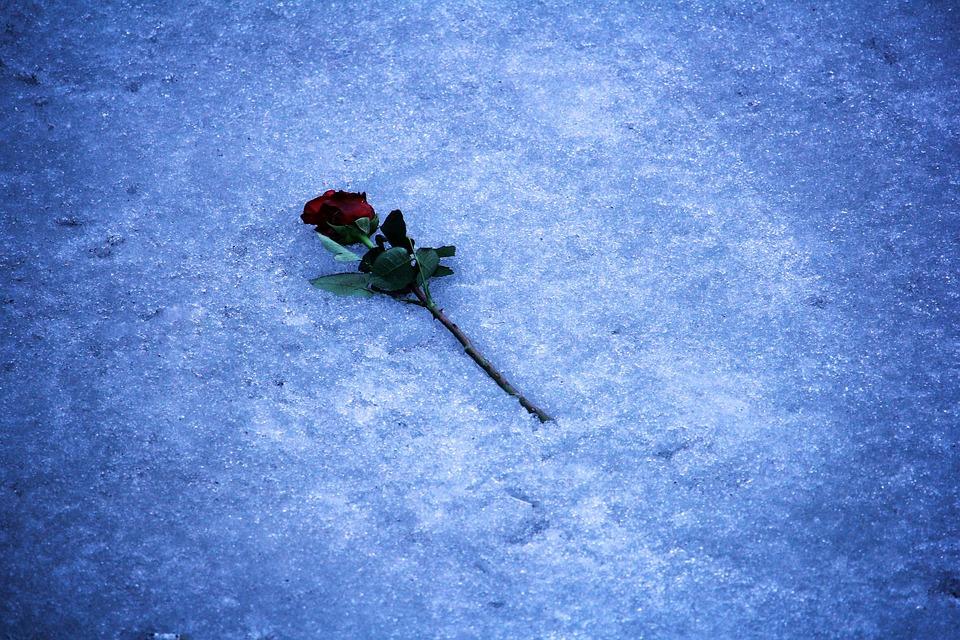 https://pixabay.com/en/rose-romance-ice-flowers-1905249/