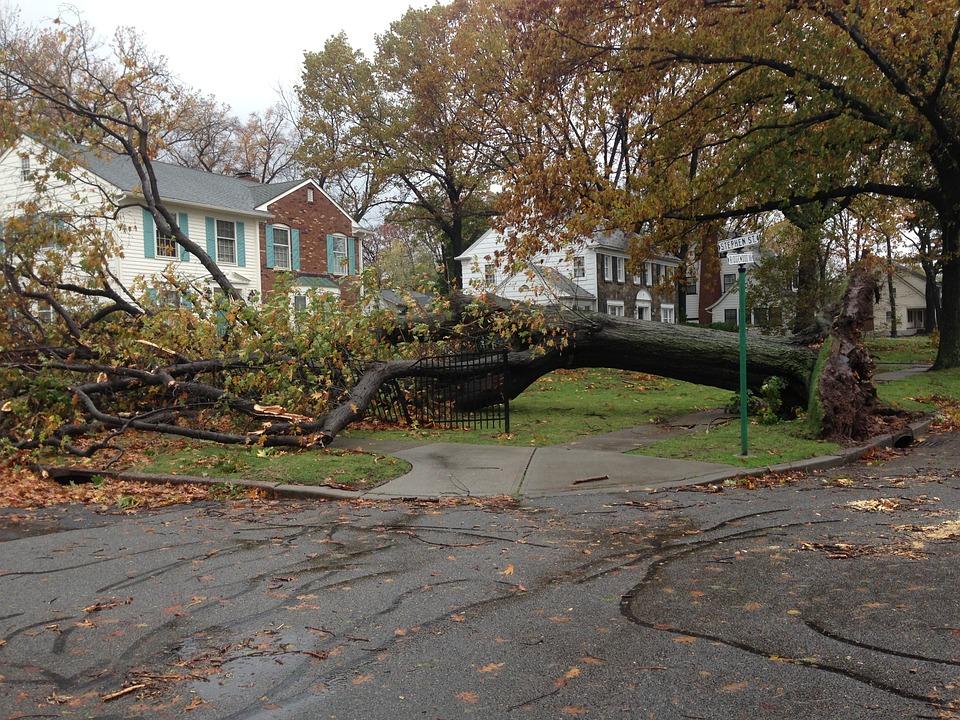 https://pixabay.com/en/fallen-tree-sandy-hurricane-229864/