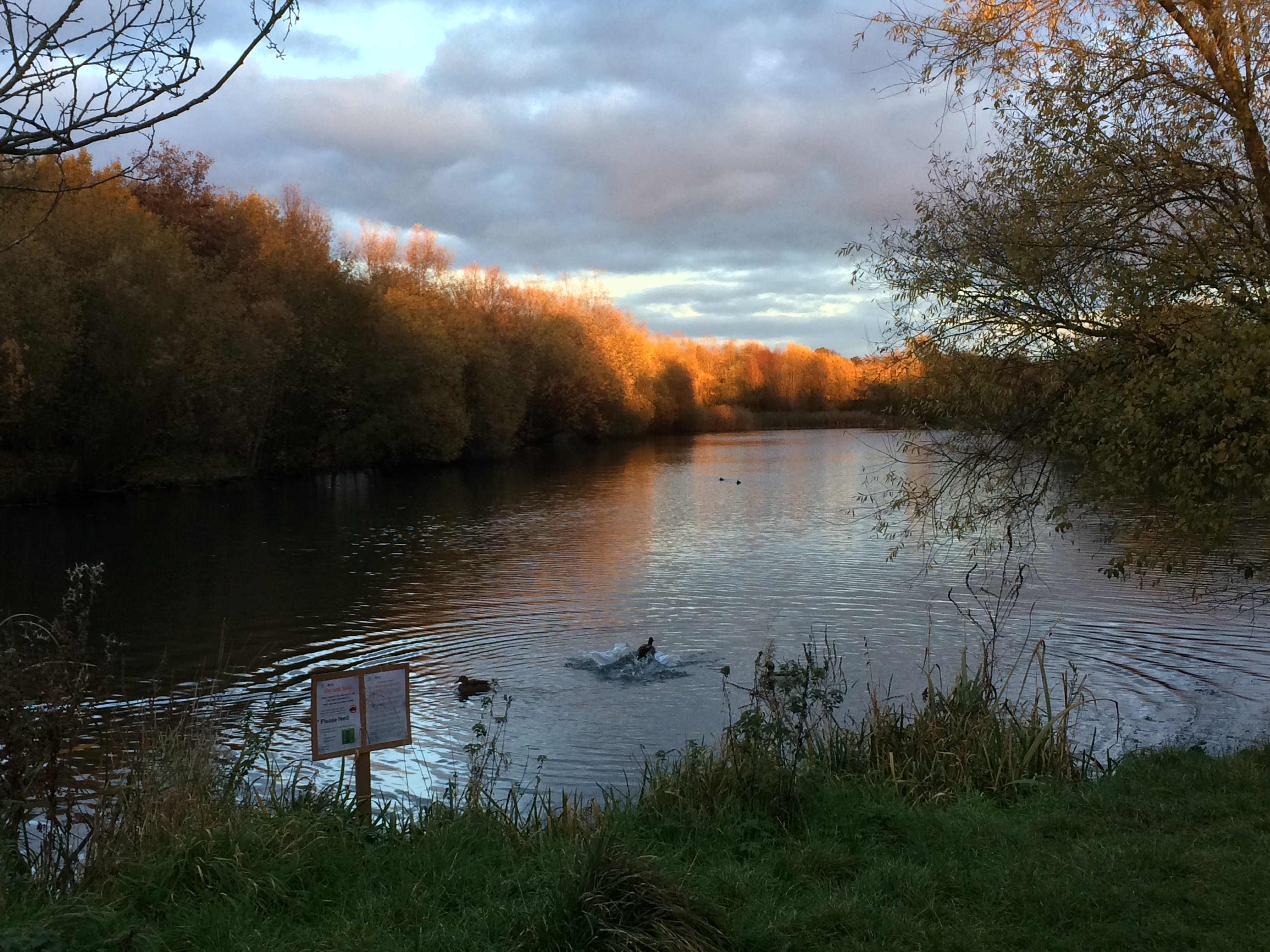 The lake near ur house at sunset