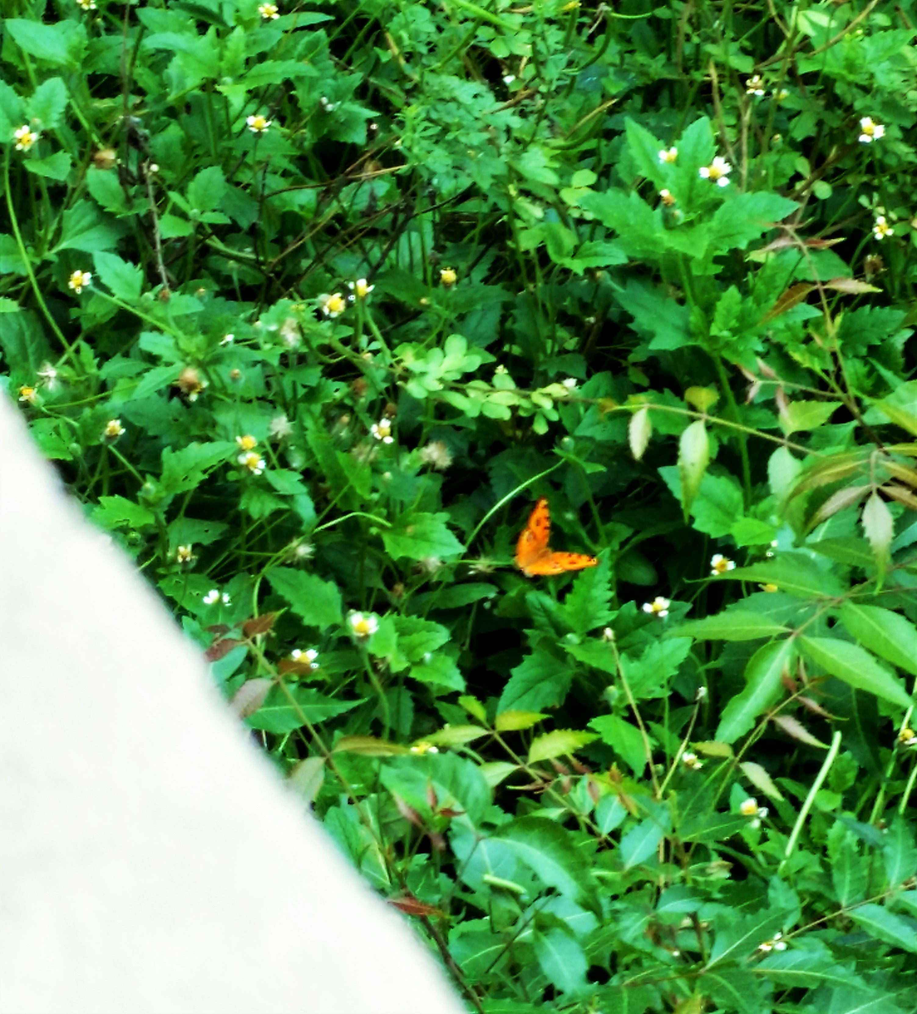 Can u find butterfly in this pic?..not so clear :(