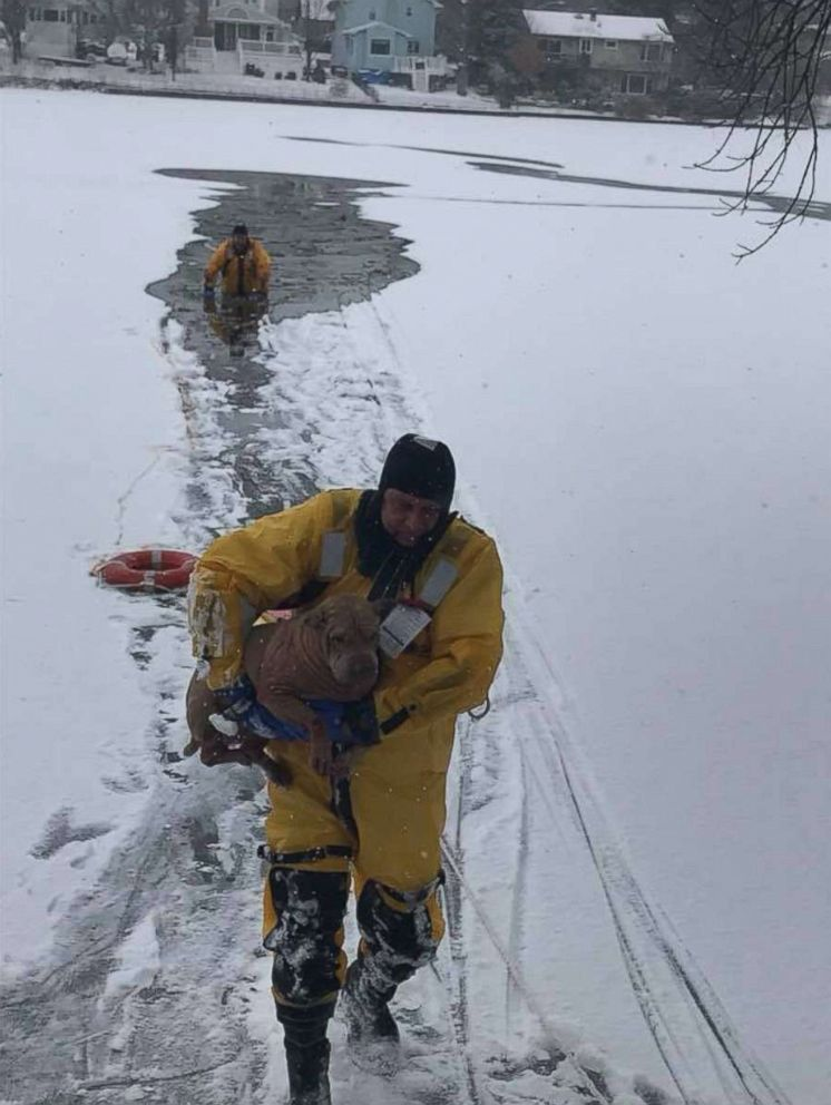 New Jersey fireman rescue Lilly the Shar Pei dog from a frozen lake