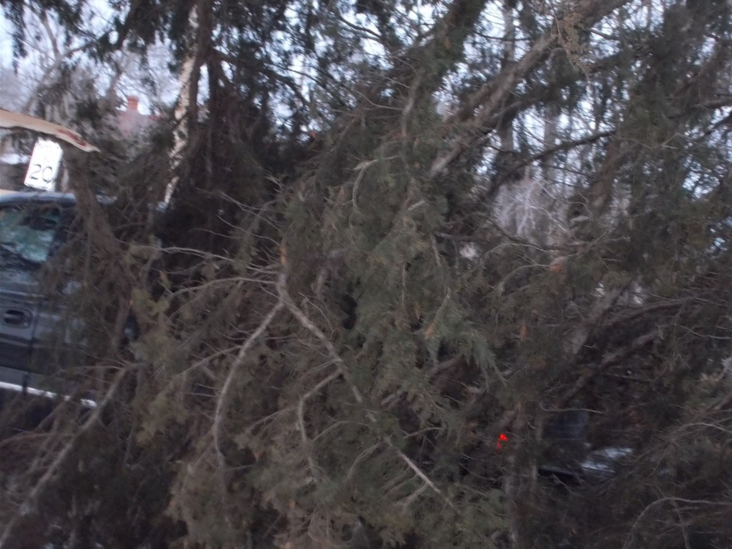 downed branches