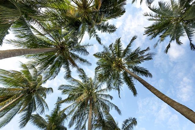 https://pixabay.com/en/coast-clouds-the-sun-palm-sky-3058728/