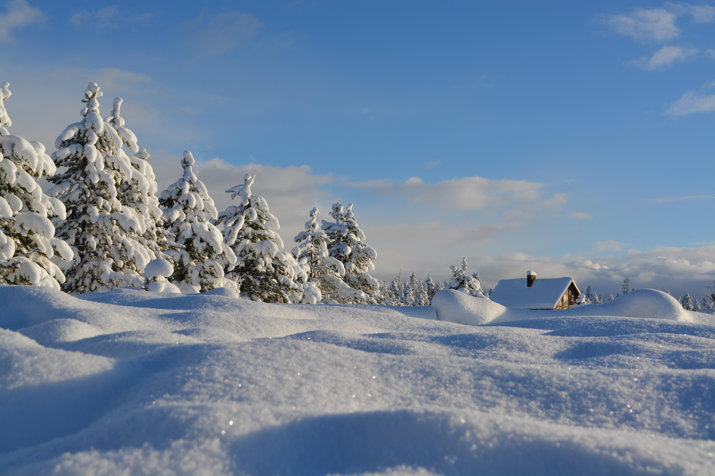 Snowy day---Photo by Bob Canning on Unsplash
