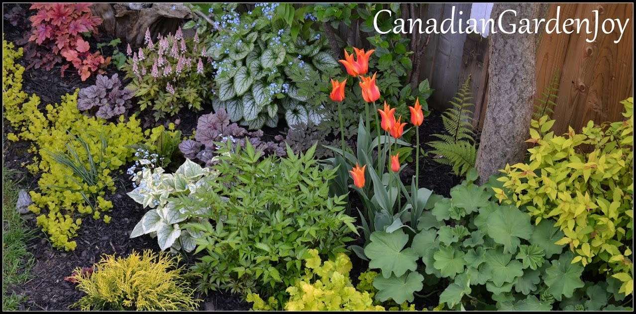 photo from Canadian Garden Joy,