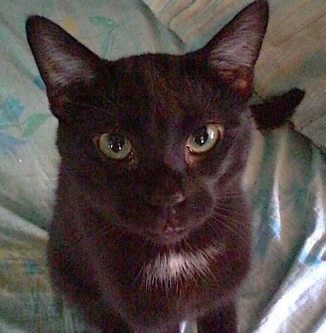 Close-up of my cat Ouija