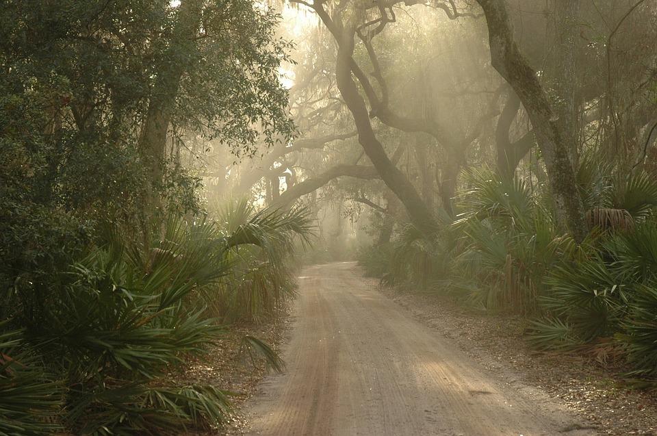 https://pixabay.com/en/forest-path-foggy-1982443/
