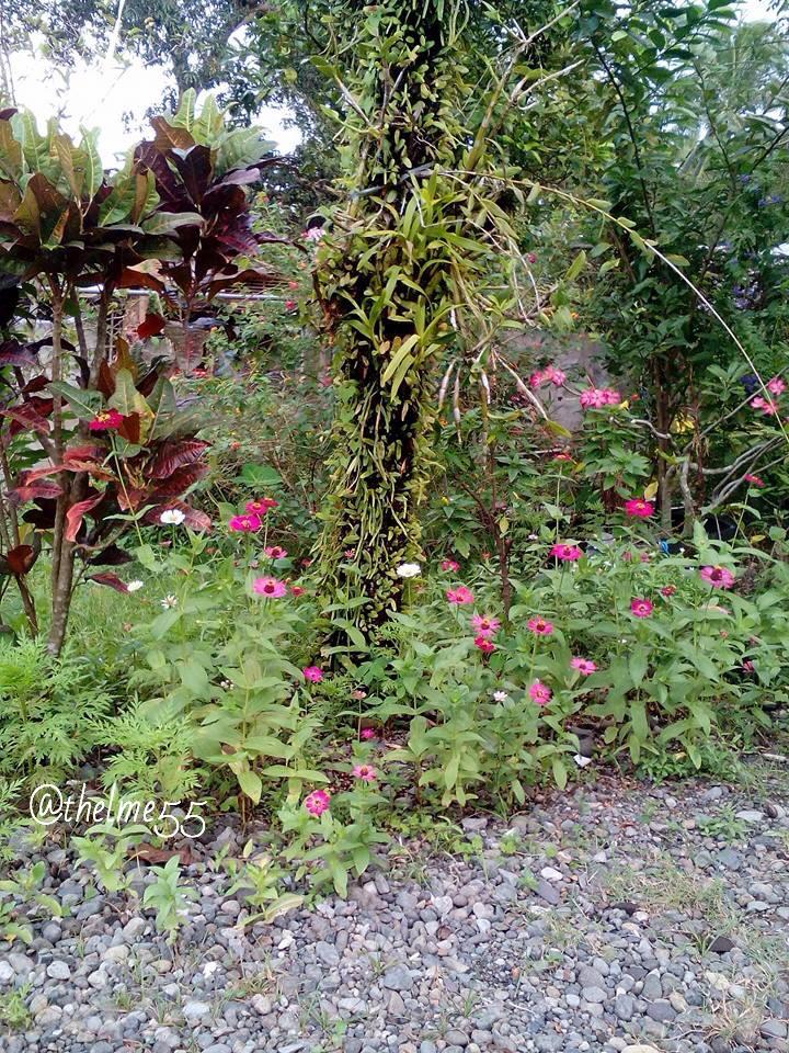 My Tropical Garden