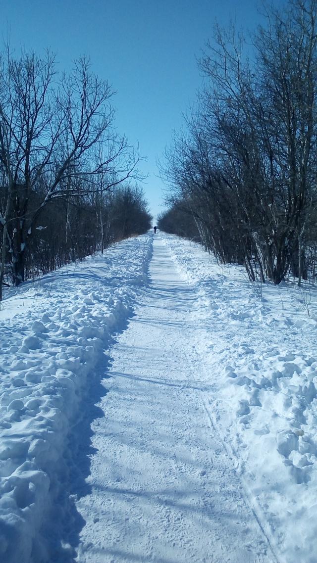 a beautiful snowy walk Image:[@Freelanzer]