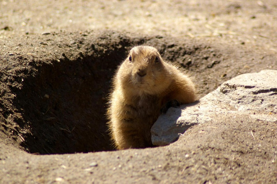 Don't trust the groundhog. Image:[Pixaby]