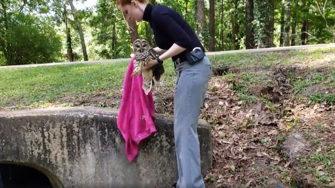 Detective Emily Shaw rescues an injured owl in Tallahassee