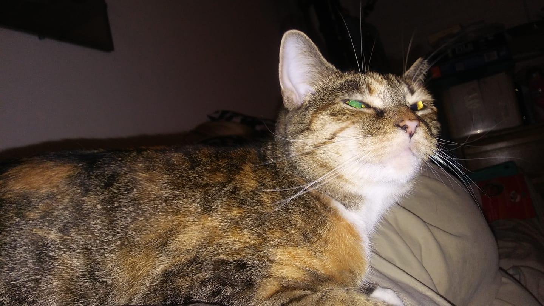 Josie, at bedtime