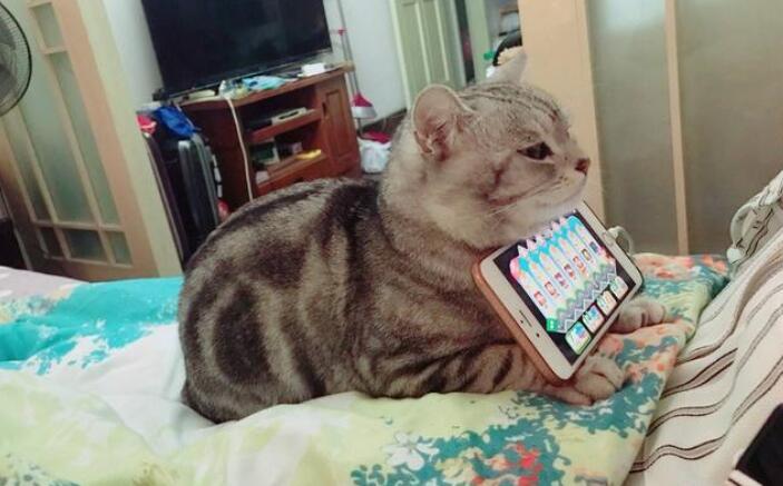 Cat phone holder