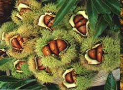 chestnuts - chestnuts