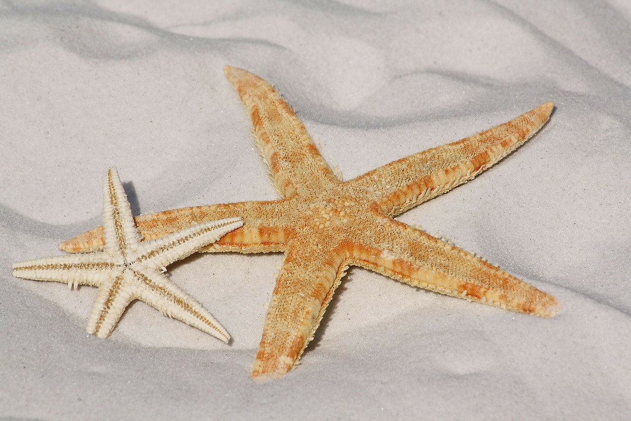 https://pixabay.com/en/starfish-sand-beach-sea-water-343791/