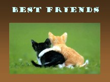We are the best friends!!!!!!! - Two cats