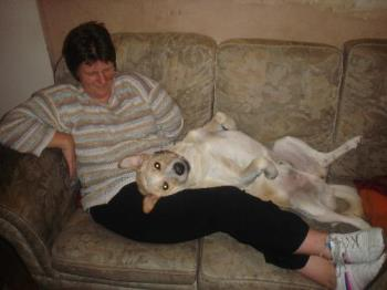 my dog with my wife - just look at him on my wifes knee