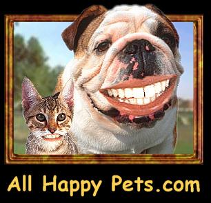 Happy - Ha Ha Ha