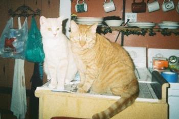the boys - 2 cats