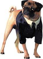 Frank - Frank, the talking dog from MIIB