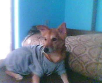 my dog  - dogged