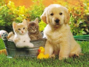 dogs and cats - Friendship between dog and cats.
