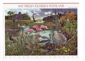 Southern Florida Wetland - Fourth in a series - Nature of America