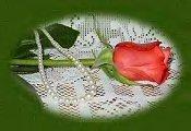 Advisory Rose - rose